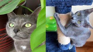 KORAT CATS 2021