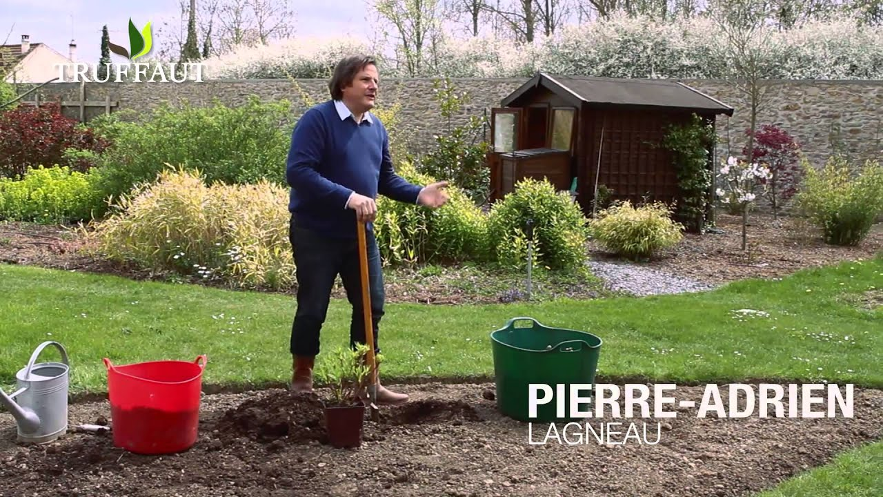 comment planter un azal e mollis jardinerie truffaut
