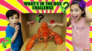 WHAT'S IN THE BOX CHALLENGE !!! REAL LOBSTER  AND MORE