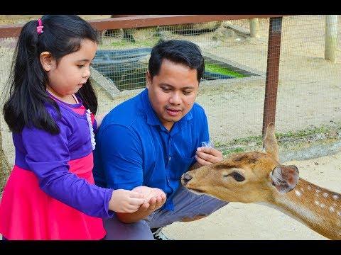 FEEDING DEER ❤️   Animal Park Colmar Tropicale   Chubbbyfam adventures
