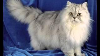bilanx корм для кошек