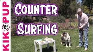 Stop Counter Surfing  Dog Training Games