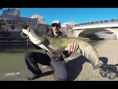 Street fishing Narbonne compètition sur le canal de la Robine | GoPro HD