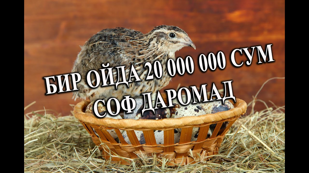 УЙ ШАРОИТИДА БЕДАНА БОҚИБ 20 000 000 СУМ ДАРОМАД ОЛИНГ MyTub.uz TAS-IX