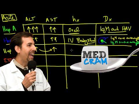 r Diseases Explained Clearly Acute vs Chronic Hepatic Diseases