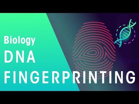 DNA Fingerprinting | Genetics | Biology | FuseSchool