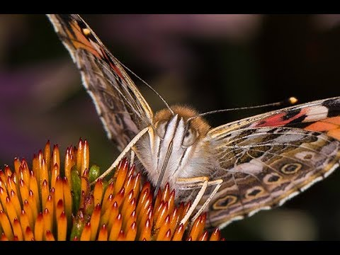 BUTTERFLY PHOTOGRAPHY – Tips And Tricks…Plus A Secret Revealed