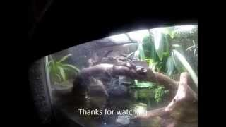 Crocodiles, snakes, water dragons and more - Melbourne Zoo Reptile House