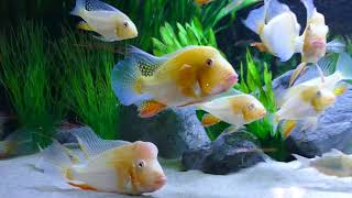 Bei Thomas Rocksien im Fischkeller: Fischverrückte machen die Welt ein Stück besser!
