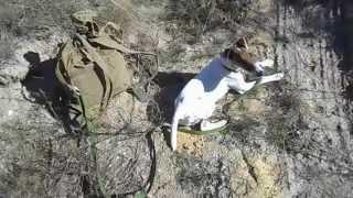 Фоксблог/Способ привязать собаку в походе.
