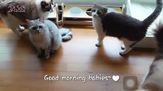 Lisa playing with her cats ** cute **