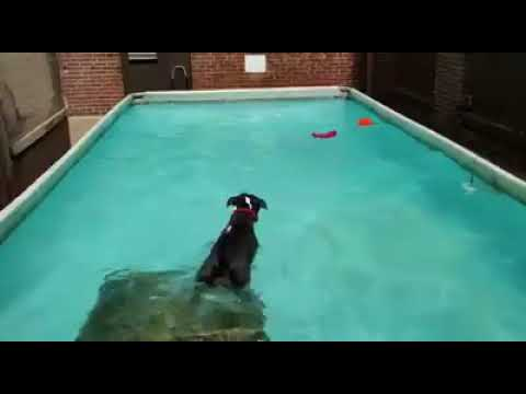 Fun in the Pool with Day Care Dogs   Dogs Swimming