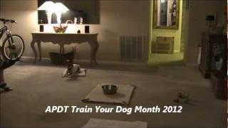 Apdt Train Your Dog Month Boudicca Pick Up 4 Toys