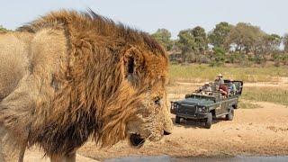 20 LIONS - LIVE!