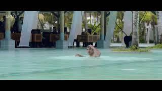 Pooja Gupta hot bikini scene from | go goa gone