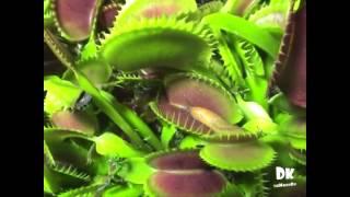 Popular Videos - Plant & Leaf