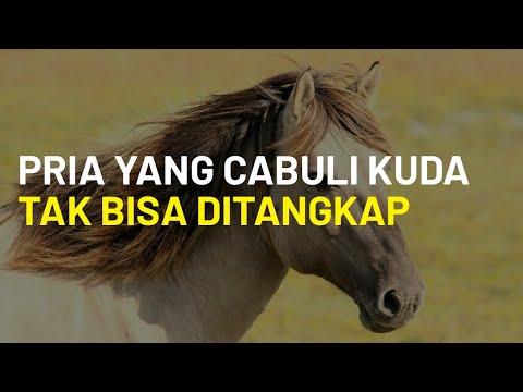 Tak Ada Hukum Perlindungan Hewan, Negara Bagian AS Tak Bisa Ringkus Pria yang Cabuli Kuda