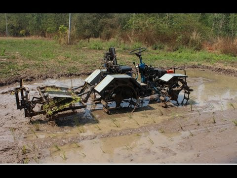New model for rice transplanter  # Root washed seedling
