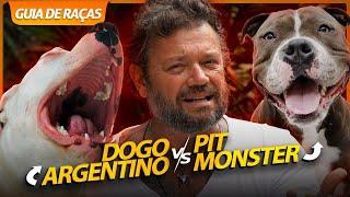 PIT MONSTER VS DOGO ARGENTINO, QUEM VENCE? | GUIA DE RAÇAS