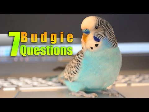 Considering a Pet Bird? Ask Yourself 7 Questions