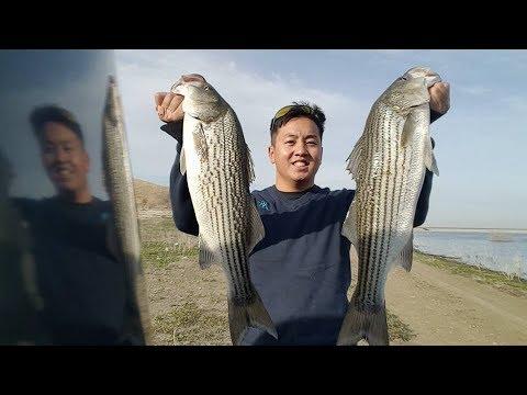 Winter striper fishing at san luis reservoir with my vibe for San luis reservoir fishing report