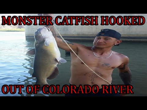 CHANNEL CATFISH CAUGHT IN COLORADO RIVER