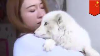 中国上海のペットショップで日本スピッツの子犬を購入した女性。犬だと...