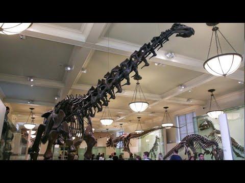Gigantic dinosaur proclaimed biggest ever discovered