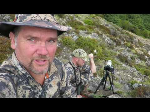 Sika hunting at it's best in the Kaweka Forest Park New Zealand
