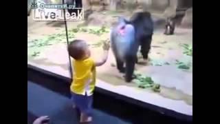 приколы с обезьянами 2015 ржачь до слёз