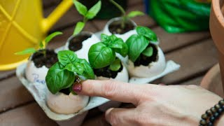 How to Start Seeds Indoors in Egg Shells for Spring Planting!