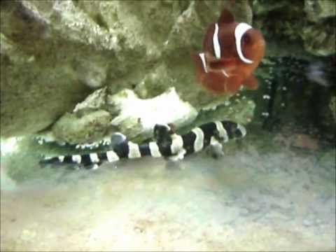 Bamboo Shark Egg Hatching
