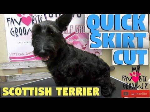 Quick Scottish Terrier Groom