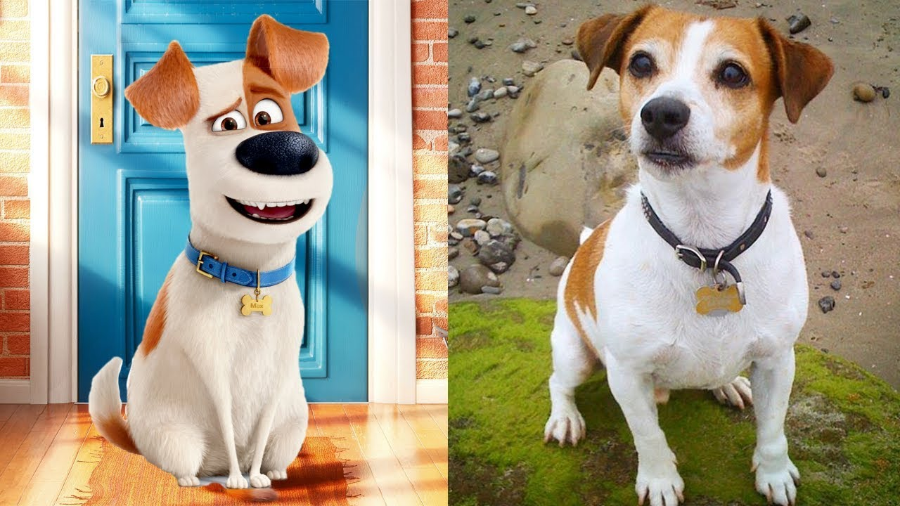 The Secret Life Of Pets Characters In Real Life All Characters 2017 Youtube