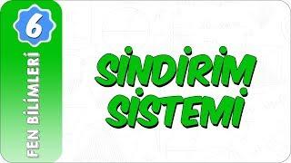 6. Sınıf Fen Bilimleri  Sindirim Sistemi