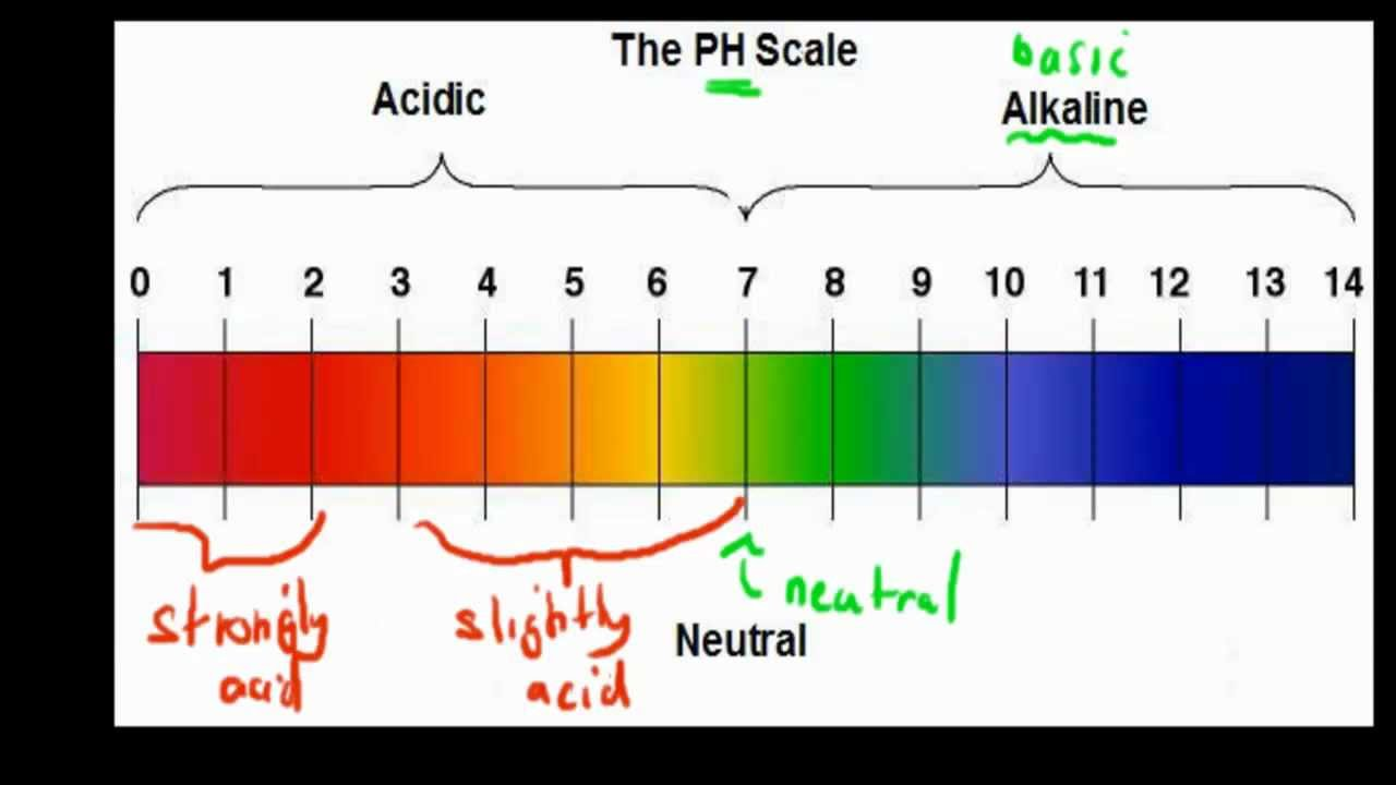 MB.1.2. Ph scale (HSC biology) - YouTube for Ph Scale Acids And Bases  186ref