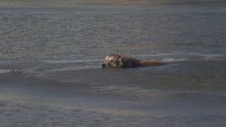 FULL RESCUE: Dog Rescued From Freezing Water