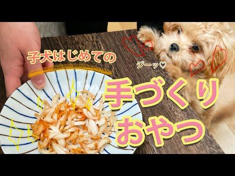 【超簡単おやつ】ペキプーの子犬にはじめての手作りおやつをプレゼントしてみた♡【No.15】