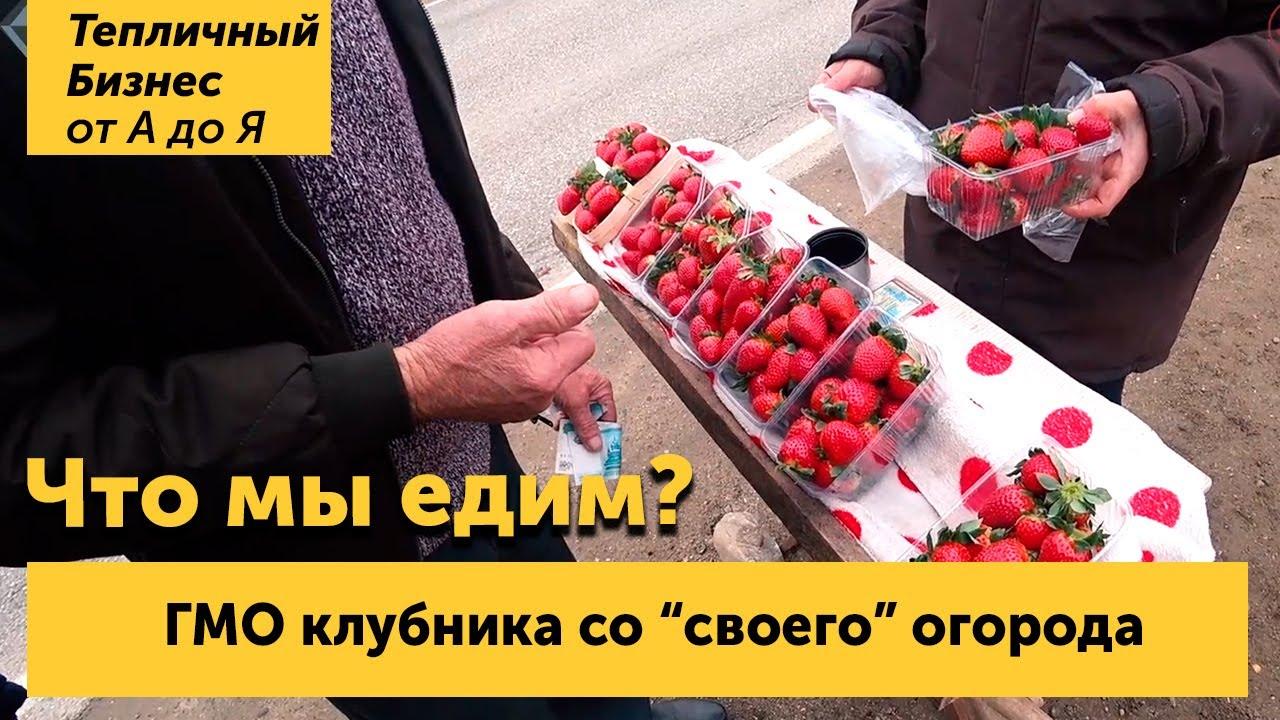 Со своего огорода!!! Клубника ГМО на Юге России