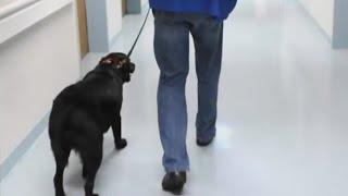 Мужчина хотел вернуть пса, взятого в приюте. Но передумал, когда узнал кто был его хозяином