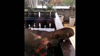 Funny Cat Loves to Pet Fish - Strange Friends - Tik Tok China / Douyin