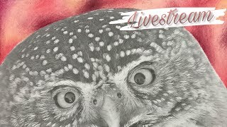 LIVESTREAM: The owl from Beautiful Creatures pt. 1