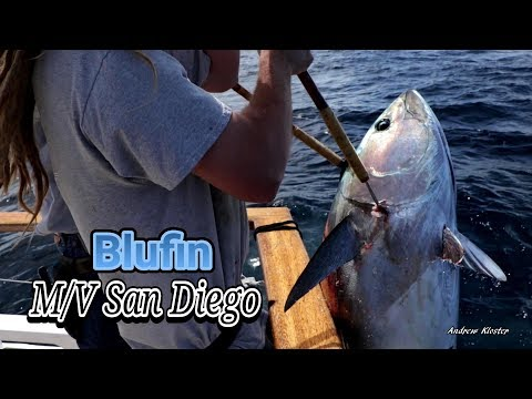 (56) 05/03/2019 - Bluefin Tuna Caught Aboard The M/V San Diego Out Of Seaforth Sportfishing