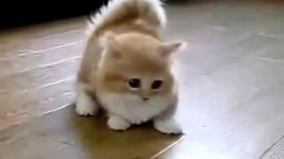 Котёнок от РУССКАЯ ПРИРОДА