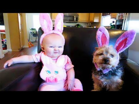 Cute Moment Dog Will Do Everything To Make Baby Happy | Dog love Baby