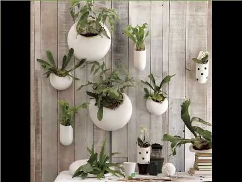Indoor Wall Hanging Plants | Indoor House Or Office Plants Picture ...