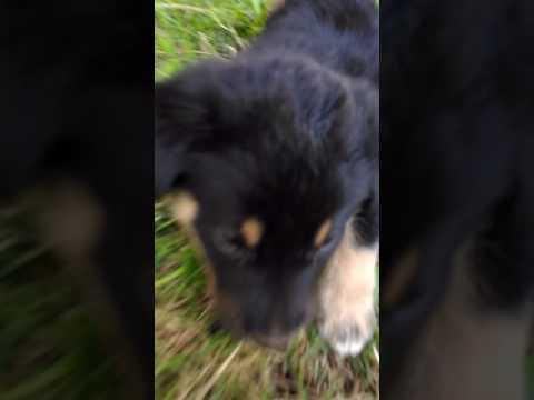 Köpek Kameraya Sal Dır Dı