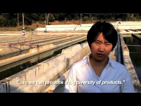Spirulina In Myanmar