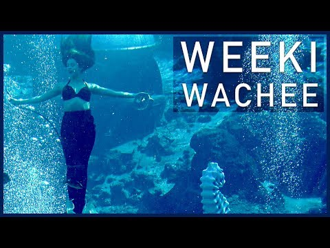 Weeki Wachee, Homosassa, and St. Pete Beach