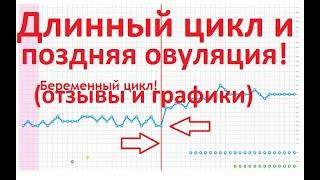 💥Поздняя Овуляция и 🗓Длинный Цикл ⏰(+Отзывы и Графики БТ беременных!)